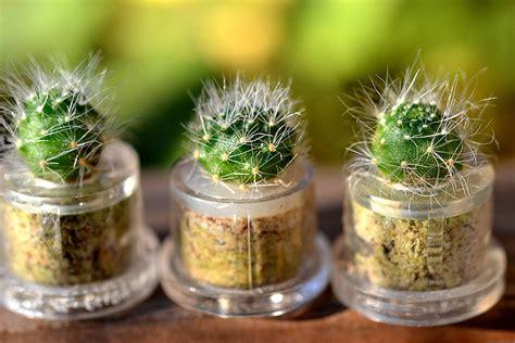 Mini Cactus mini cactus terrarium keychains the green