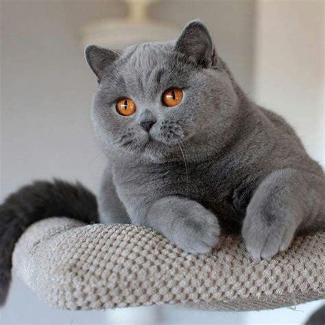 Sho Kucing Di Petshop demi kucing tersayang tak masalah keluar rp 2 juta di pet