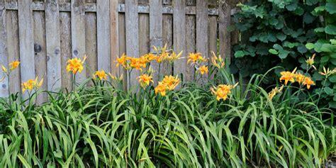 13 easy garden plants to grow cheap hardy plant ideas