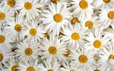 le tapis des fleurs fonds d ecran fleurs page 2