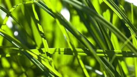 pflanzen pflanzen a z pflanzen pflanzen natur planet wissen