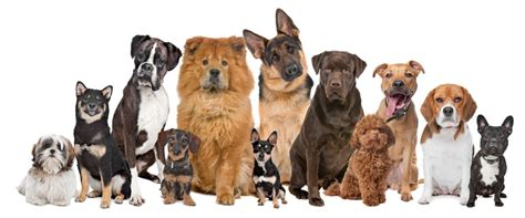 different dogs best temperature for different breeds