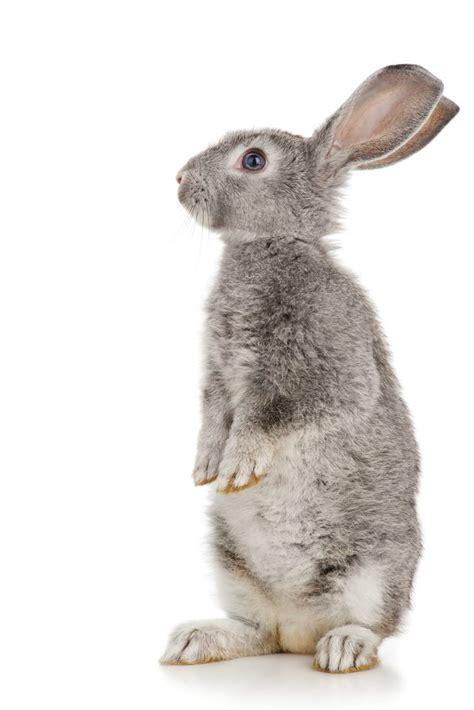 how to dispose of a dead how to dispose of a dead rabbit cuteness