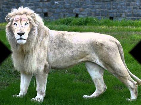 imagenes de animales en extincion animales en peligro de extinci 243 n s o s youtube