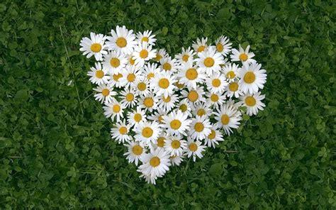 bloemen liefde 25 mooie liefdes hartjes wallpapers in hd kwaliteit
