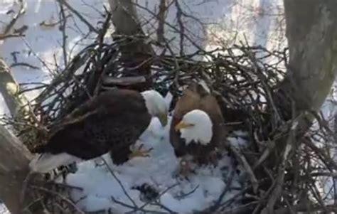 eagle cam bald eagle nest camera lesson plans and