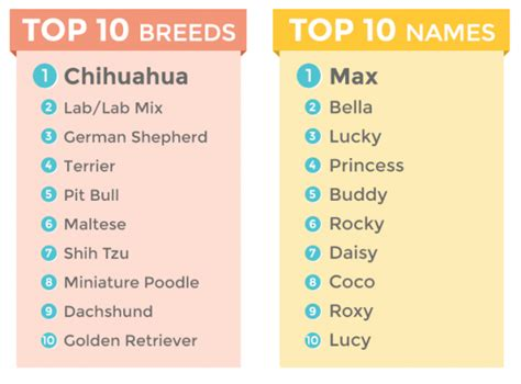 top 10 most popular dog names image gallery most popular dog names