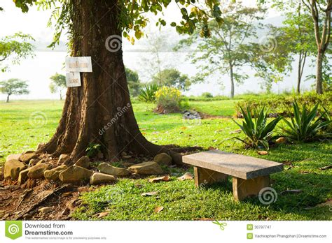 bench under tree bench under a tree royalty free stock photography image