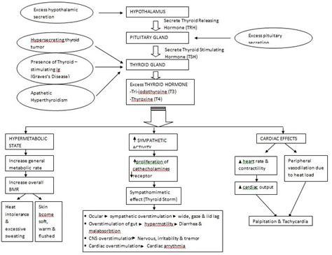 how to make a pathophysiology diagram hyperthyroidism pathophysiology
