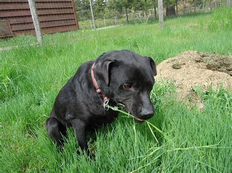 how much do puppies eat why do dogs eat grass dr marty becker