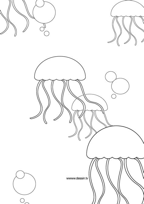 simple jellyfish coloring pages