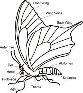 Science worksheet parts of a butterfly school planning juxtapost