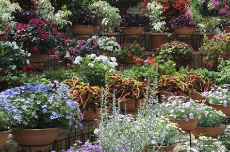 Garten Pflanzen Richtig Schneiden by K 252 Belpflanzen Schneiden Richtig In Form Bringen