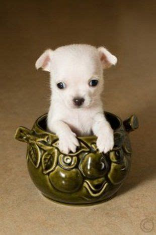 Small Inside Dogs That Don T Shed by 11 Ways To Boost Your Metabolism All Day Puppys So