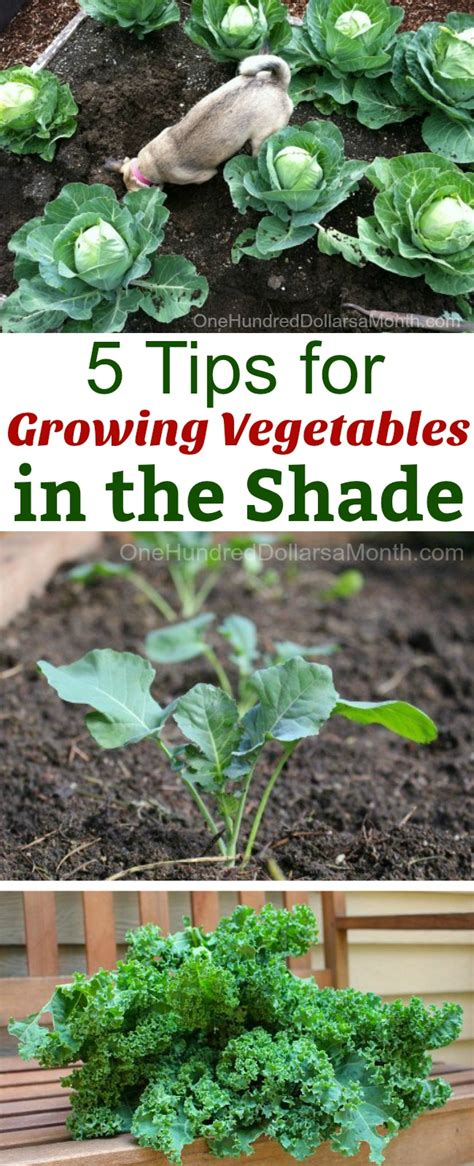 What Garden Vegetables Like Shade 5 Tips For Growing Vegetables In The Shade One Hundred