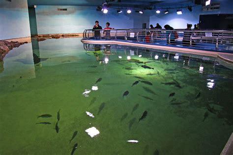 sharjah summer caign showcases water walk way over the water sharjah aquarium