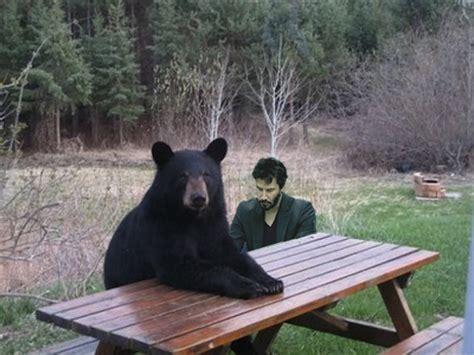 Patient Bear Meme - patient bear bear sitting at table know your meme