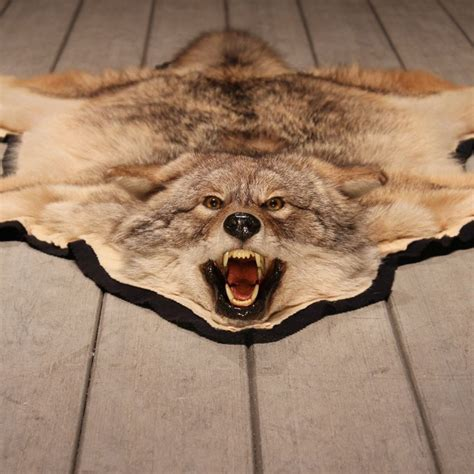 coyote rug mount coyote rug rugs ideas