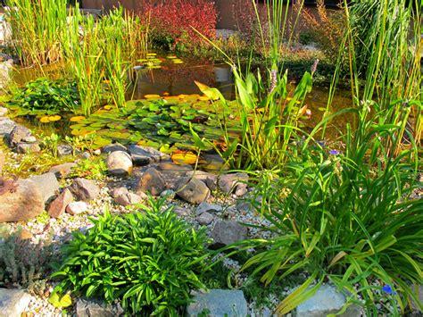 Garten Teich Pflanzen by Gartenteich