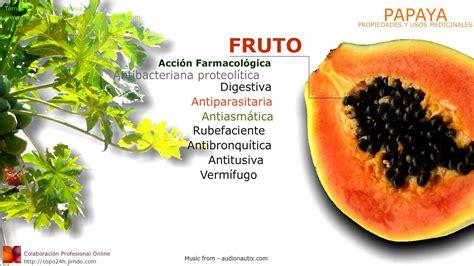 Propiedades Medicinales De La Papaya Botanica | propiedades medicinales de la papaya botanica