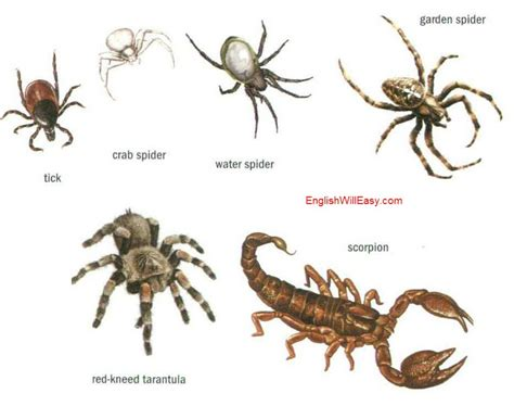 species of arachnida and myriopoda scorpions spiders mites ticks and centipedes injurious to classic reprint books insects