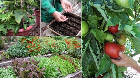 home vegetable gardening  beginners  ace gardener