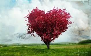love tree wallpapers hd wallpaper