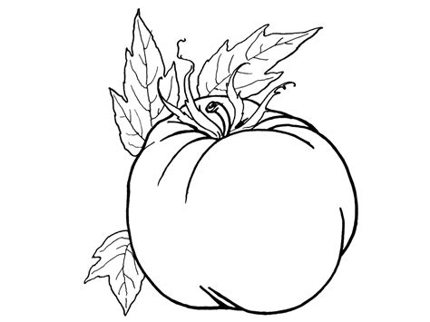 tomatoes coloring pages    print