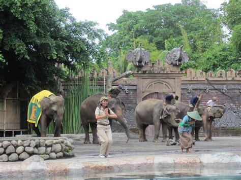 bali safari and marine park bali activity go on a adventure at bali safari and marine park