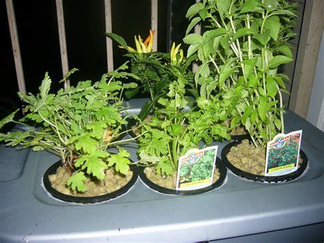 hydroponics  home   beginners  steps
