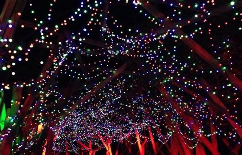 L A Zoo Lights Discount Tickets Spectacular Light Show Zoo Lights Discount