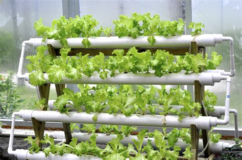 hydroponic systems in a greenhouse garden greenhouse