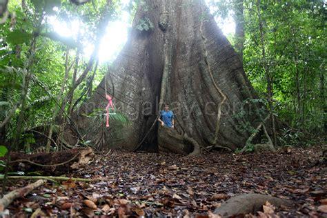 amazon hutan mydreamyvacation menjelajahi hutan amazon ika amna
