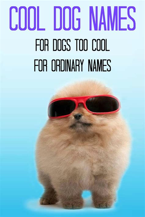 cool puppy names cool names for the coolest or puppy pomeranians and animal