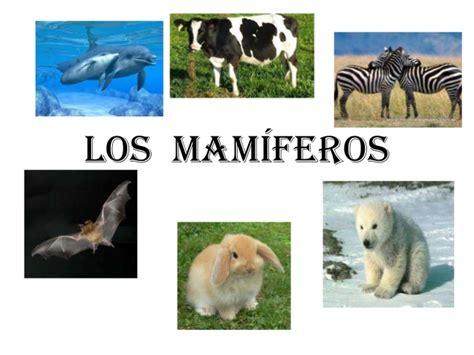 animales vertebrados mamiferos caracteristicas portal los mam 237 feros