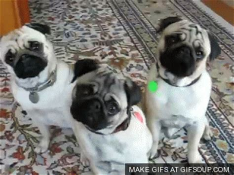 pugs tilt creativity technology and the future of storytelling