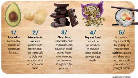 is food bad for cats or bad 5 human foods you might give your cat catster
