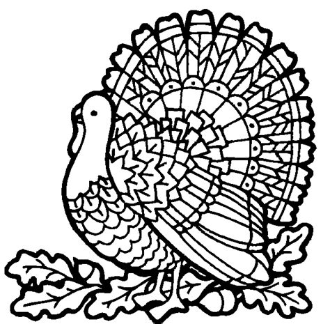 coloring page wild turkey free a wild turkey coloring pages