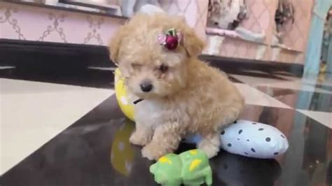 puppy in the world cutest puppies in the world 2014 www pixshark