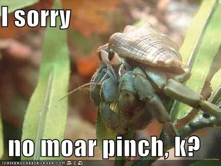 Crab Meme - cute crab meme all about hermit crabs pinterest