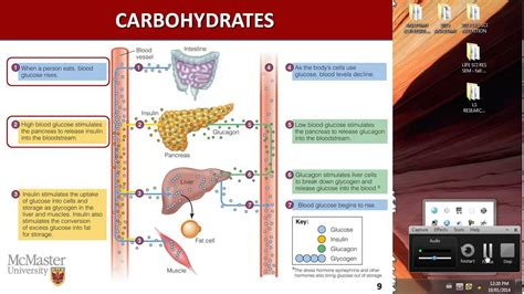 carbohydrates nutrition nutrition carbohydrates i part 1