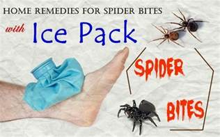 spider bites home remedy 21 home remedies for spider bites on legs arm and