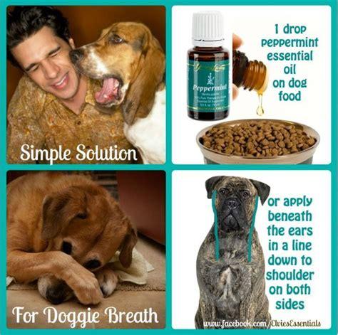 how to get rid of puppy breath best 25 bad breath ideas on puppy breath