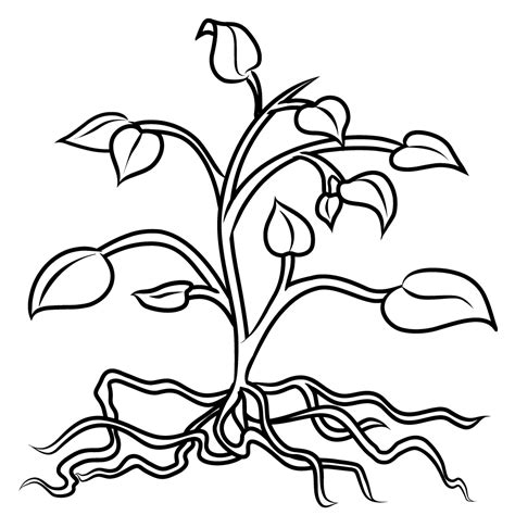 free parts the plant coloring pages
