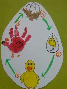 ciclo de vida del pollo para colorear e imprimir apexwallpaperscom 1000 images about proyecto did 225 ctico los animales de