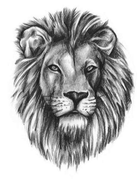 lion tattoo images designs 34 best outline images on simple