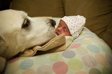 dogs with babies dogs and babies cuteness photo gallery