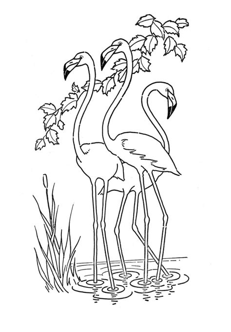 fun coloring pages clipart coloring pages kids printable flamingo coloring page the