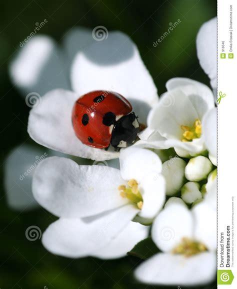 fiore da stare immagini fiori da stare coccinella di estate fotografia