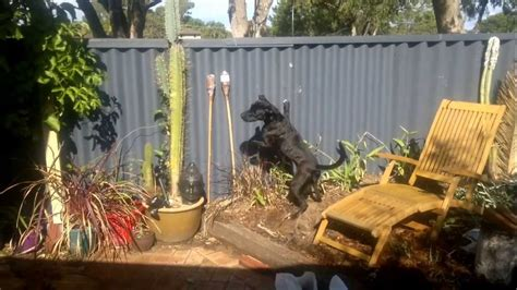 how to keep from jumping fence reducing barking and jumping at fence lines charming